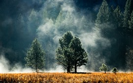 Preview wallpaper Forest, pines, trees, fog, autumn