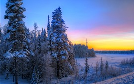 Forest, trees, snow, winter, sunset