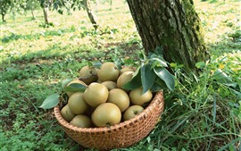 Fresh pears, basket, trees