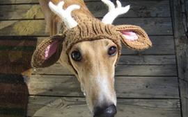 Preview wallpaper Funny dog, deer, horn