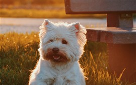 Preview wallpaper Furry white dog, sunshine, bench