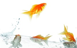 Preview wallpaper Goldfish, water, splash, jump, white background
