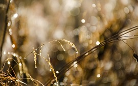 Preview wallpaper Grass, light circles, hazy, water droplets