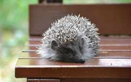 Preview wallpaper Hedgehog, bench