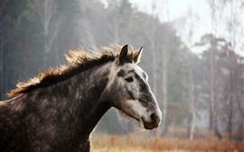 Лошадь, лицо, грива