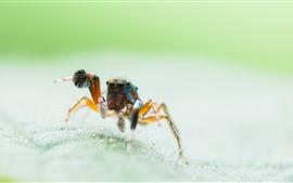Inseto, aranha, folha, fundo nebuloso