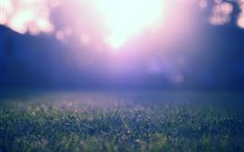 미리보기 배경 화면 초원, 잔디, 섬광, 햇빛, 흐릿한