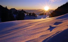 미리보기 배경 화면 아침, 눈, 경사, 나무, 태양 광선, 겨울