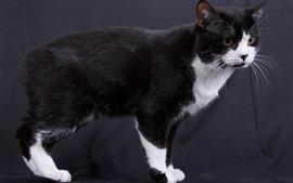 Um gato preto e branco
