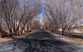 Pamir plateau, trees, road, winter