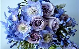 Rosas moradas, ramo, flores