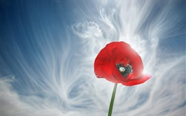 Preview wallpaper Red poppy flower close-up, sky, white clouds