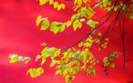 Parede vermelha, folhas verdes, galhos