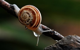 Preview wallpaper Snail, insect, antennae, tree branch