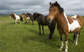 Некоторые лошади, трава, облака