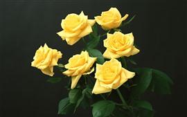 Aperçu fond d'écran Quelques roses jaunes, fond noir