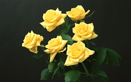 Algumas rosas amarelas, fundo preto