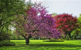 Spring, flowers, trees, grass, garden