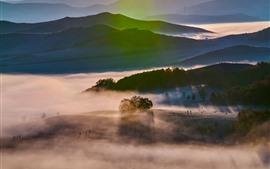Raios de sol, árvores, nevoeiro, manhã de outono, prados de Bashang, China