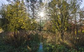 Деревья, растения, солнечные лучи
