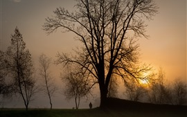 Trees, sunset, child, dog, fog, silhouette