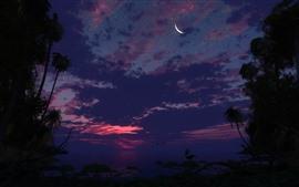 Tropical, estrelado, noite, mar