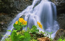 Preview wallpaper Waterfall, yellow flowers