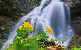 미리보기 배경 화면 폭포, 노란 꽃