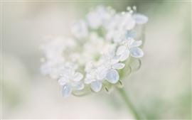 Primer plano de pequeñas flores blancas, brumoso
