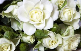 Preview wallpaper White roses, flowers, petals