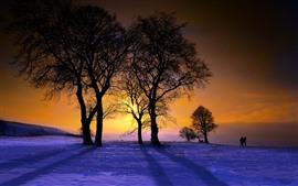 Зима, деревья, закат, снег, люди
