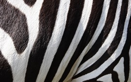 Preview wallpaper Zebra, black and white lines