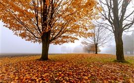 預覽桌布 秋天的早晨,樹木,霧,黃葉