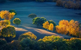 Autumn, trees, grassland