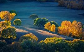Outono, árvores, pastagens