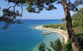 Praia, árvores, tropical, mar, verão
