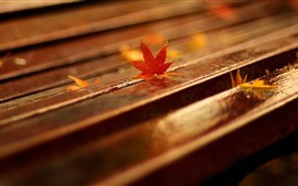 Bench, red maple leaves, hazy
