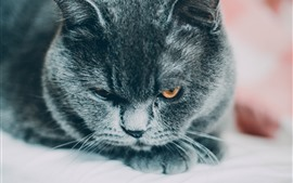 Preview wallpaper Black cat look at you, face, eyes, rest