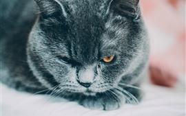 Черная кошка смотрит на тебя, лицо, глаза, покой