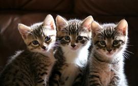 Lindos tres gatitos, mira