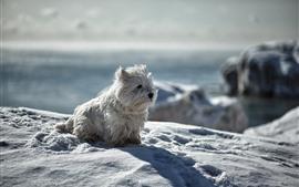 Милый белый щенок, снег, зима