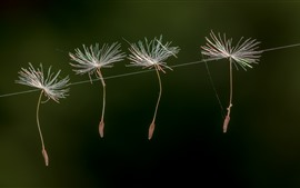 Preview wallpaper Dandelion seeds