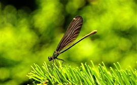 Preview wallpaper Dragonfly, green leaf