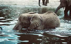 Preview wallpaper Elephant baby in water