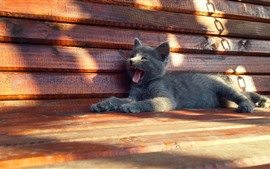 Preview wallpaper Gray kitten, open mouth, bench, sun rays