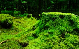 Preview wallpaper Green grass, plants, nature scenery