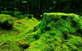 Зеленая трава, растения, пейзажи природы