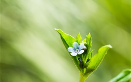 Green leaves, flower