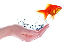 Mão, peixinho, água, fundo branco, imagem criativa