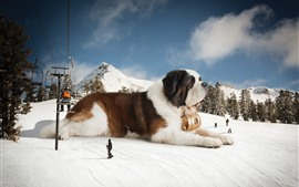 Preview wallpaper Huge dog, snow, winter, creative picture